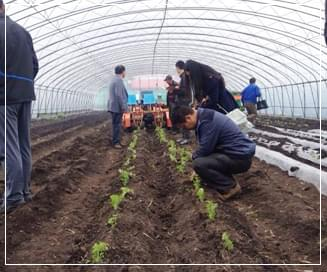 富来威移栽机在哈尔滨成功移栽芹菜