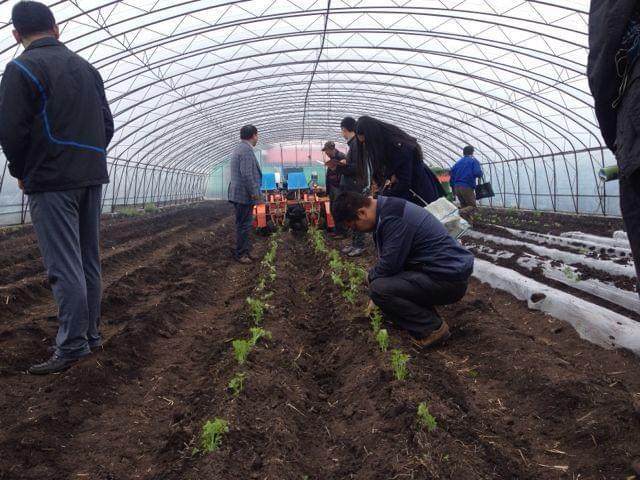 蔬菜移栽机文献综述报告