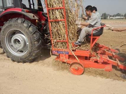 富来威巨菌草种植机为菌草生产提供解决方案