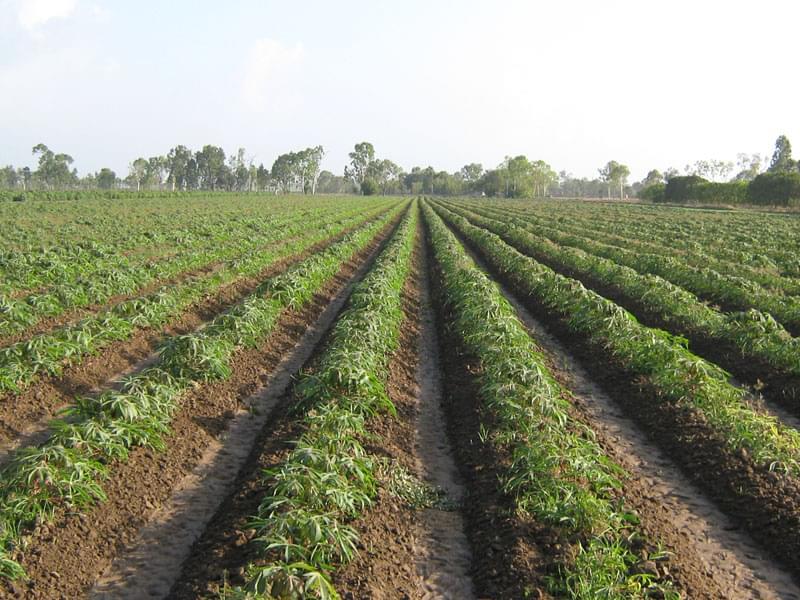 国内外木薯种植机研究概述