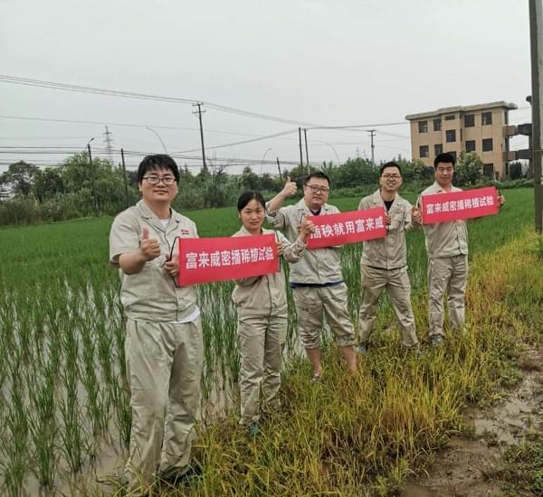 富来威水稻密播稀植技术增收228.5元/亩