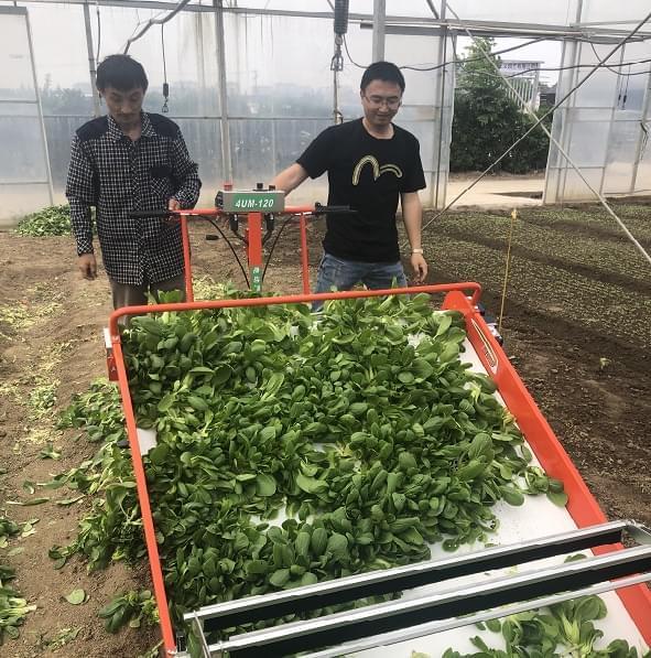 富来威新款蔬菜收获机上海合作社初试牛刀