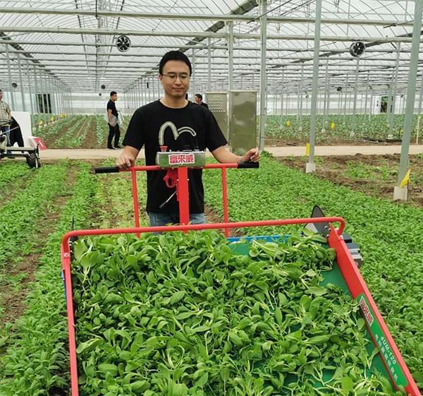 富来威蔬菜收获机在太仓大显身手
